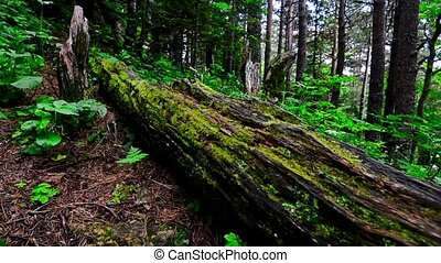Scenic view of green forest and log with moss - Sliding view...