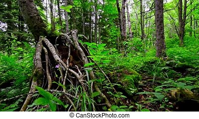 Scenic view of green forest thicket and tree roots - Sliding...