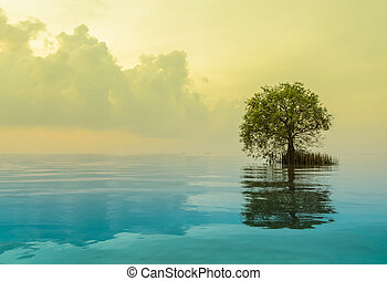 Scenic view of mangrove apple with reflection in the sea. Yellow and blue color image