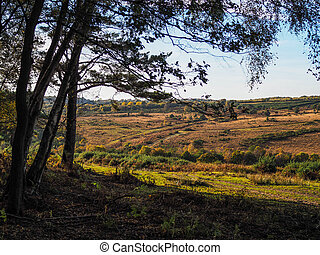 Scenic View of the Ashdown Forest in Sussex