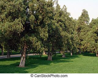 scenic view of the public garden
