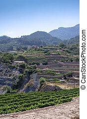 Scenic View of Tramuntana Terraces and Vineyards Mallorca, Spain