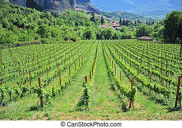 Scenic view of wineyards in mountains