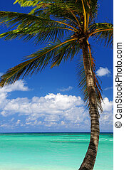 Scenic view on Caribbean sea with palm tree