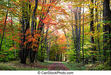 Walking trail through colorful trees in the autumn time
