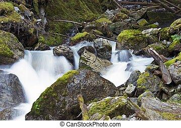 Scenic Washington State. Small Beautiful Mossy Creak in ...