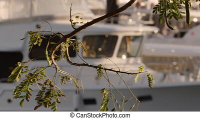 Scenic white yacht shot - A beautiful blur to focus shot of...