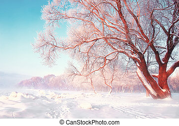 Scenic winter background. Snowy frosty tree on bright sunny day. Natural scene after snowfall. Hoarfrost on the branches of trees. Christmas theme. Snow-white nature