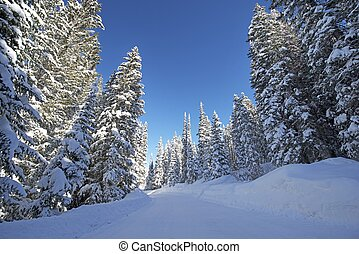 Scenic Winter Forest Road. Snowy Forest Backcountry Road in...