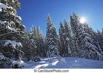 Scenic Winter Forest
