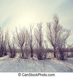scenic winter landscape