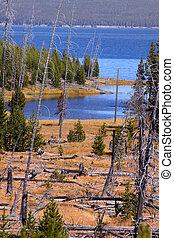 Yellowstone lake - Scenic Yellowstone lake shore in autumn ...