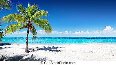 scenico, corallo, spiaggia, con, palma