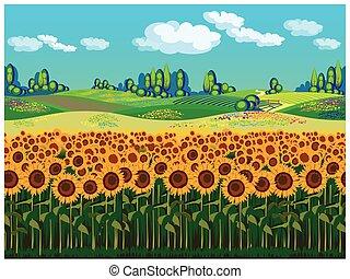 Giallo, girasoli, paesaggio, fondo. Paesaggio, giallo ...