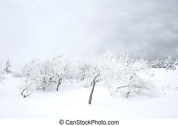 scenics, hiver