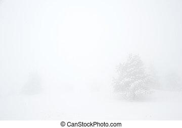 scenics, inverno