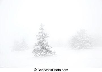scenics, tél