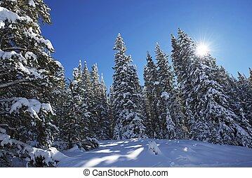 sceniczny, zima, las