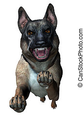 schäferhund, angriffe