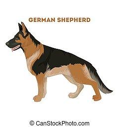 schäferhund, dog.