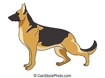 schäferhund, hund