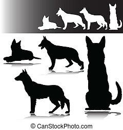 schäferhund, silhouetten, vektor
