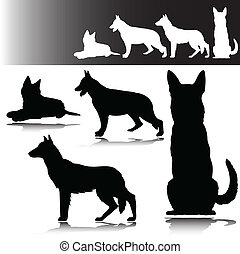 schäferhund, vektor, silhouetten