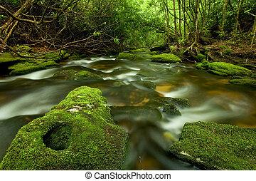 schöne , üppig, regenwald, bach