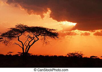schöne , afrikanisch, sonnenuntergang