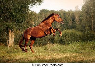 schöne , aufbäumen, pferd, auf, bucht