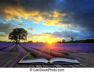 schöne , begriff, atmosphärisch, reif, beschwingt, landschaft, felder, bild, himmelsgewölbe, lavendel, kreativ, betäuben, sonnenuntergang, englisches , wolkenhimmel, aus, landschaftsbild