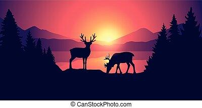 schöne , berge, tierwelt, see, zwei, elch, sonnenaufgang