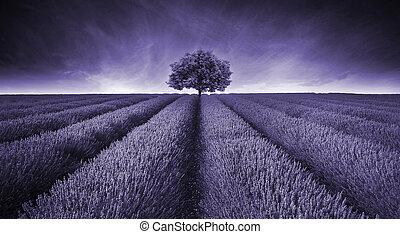 schöne , bild, von, blaßlila feld, landschaftsbild, mit, alleinstehender baum, paßte, in, mauve