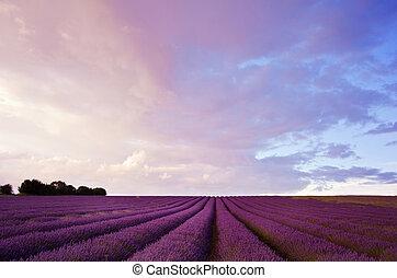schöne , blaßlila feld, landschaftsbild, mit, dramatischer himmel