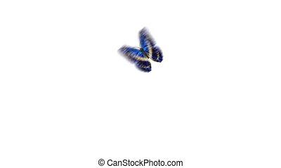 schöne , blaues, papillon, gefärbt, sitzen, schirm, fliegendes, hintergruende, grün, alpha, mask., loop-able, 4k, 3840x2160, close-up., weißes, ultra, animation, hd, 3d