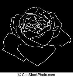 schöne , blume, skizze, rose, freigestellt, schwarz, monochrom, weißes