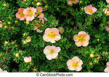 Weisse Blumen Kleingarten