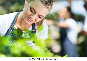 schöne, blumenhändler, kleingarten, arbeitende