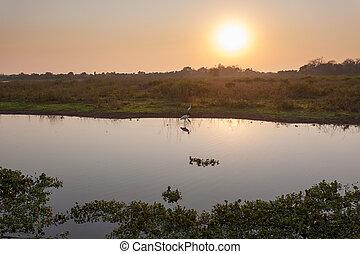 schöne , brasilien, landschaftsbild, pantanal, amerika,...