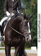schöne , braunes pferd, sport, porträt