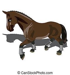 schöne , braunes pferd