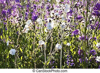 Schöne Blumen Wiese Bunte Detail