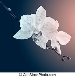 schöne , card., mood., weinlese, traurige , flowers., orchidee