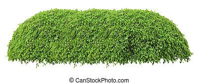 schöne , dekorativ, baum, freigestellt, grüner hintergrund, frisch, weißes