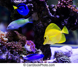 stockfotografien von welt fische salzwasser aquarium bunte csp14857992 suche nach foto clipart. Black Bedroom Furniture Sets. Home Design Ideas