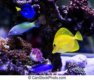 salz für aquarium