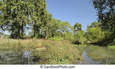 schöne , fluß, nationalpark, indien