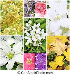 schöne , fruehjahr, collage