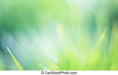 schöne , grün, bokeh, hintergrund