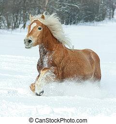 schöne , haflinger, schnee, langer, rennender , mähne